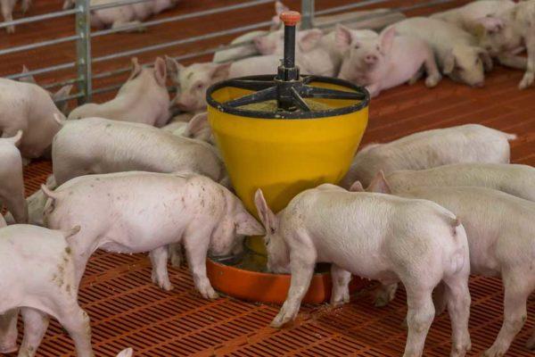 cerfrance-cotes-armor-comptabilite-prix-aliment-porc